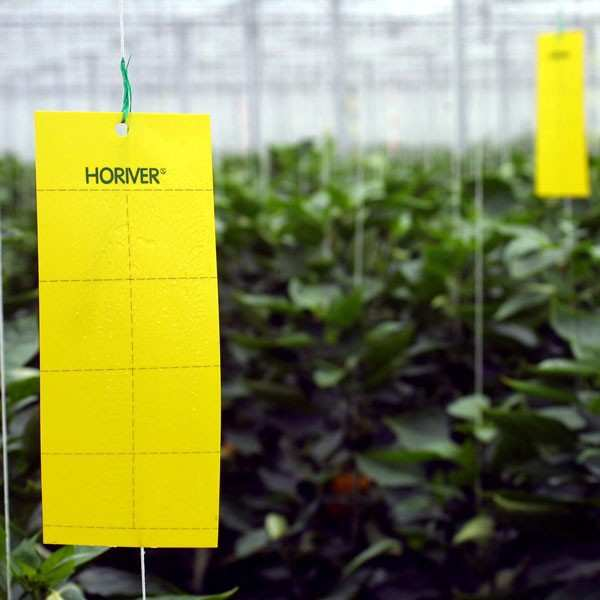 Capcana pentru monitorizare daunatori HORIVER galben, Koppert, 10 capcane
