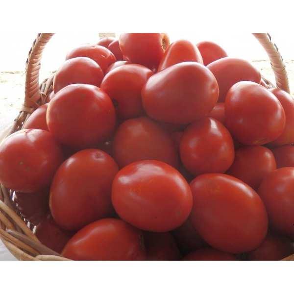 Seminte tomate Chelse SEMINIS 1.000 seminte