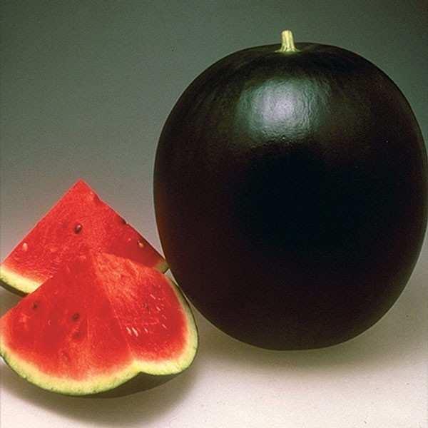 Seminte pepene verde Pata Negra F1 SEMINIS 1.000 seminte