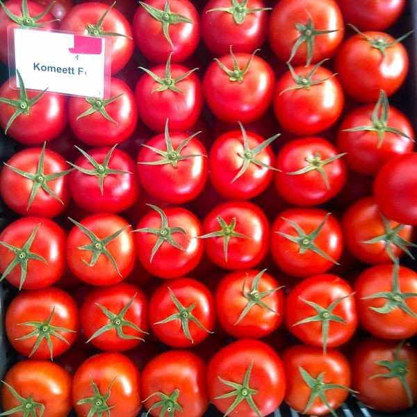 Seminte tomate Komeett SEMINIS 1.000 seminte