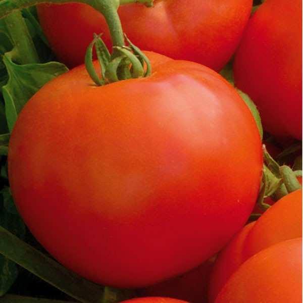 Seminte tomate Mirsini SEMINIS 1 gr
