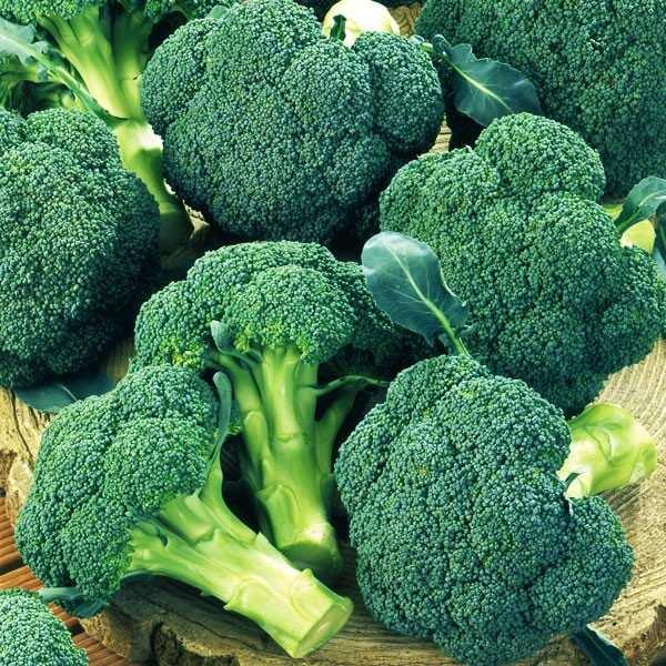 Seminte broccoli Ironman F1 SEMINIS 1.000 seminte