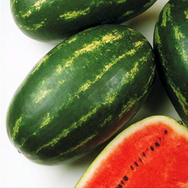 Seminte pepene verde Melania F1 SEMINIS 250 seminte
