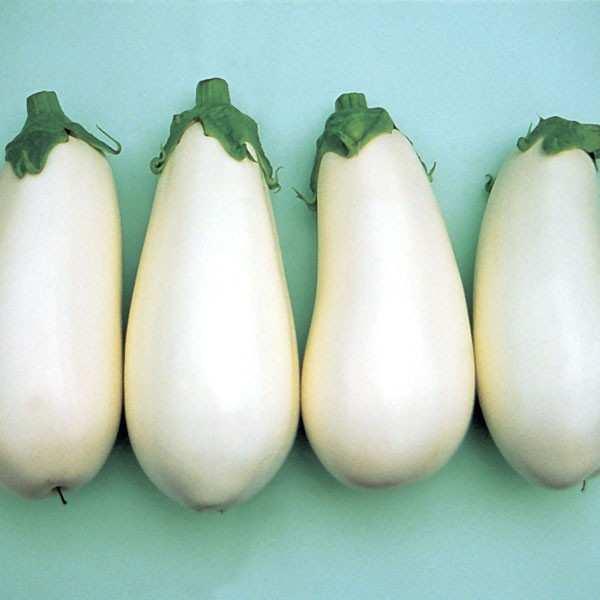 Seminte vinete albe Bibo F1 SEMINIS 500 seminte