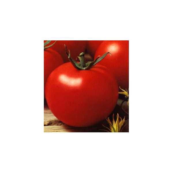 Seminte tomate Optima SEMINIS 500 seminte