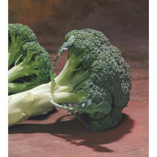 Seminte broccoli Chevalier F1 SEMINIS 1.000 seminte-Seminte Profesionale