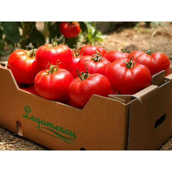 Seminte tomate Wrestler SEMINIS 500 seminte