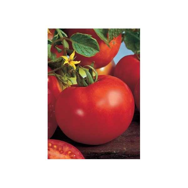 Seminte tomate Marissa SEMINIS 1000 seminte